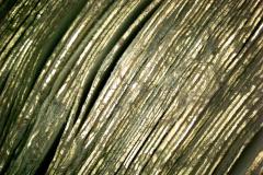 Az aranyozott és poncolt metszés mikroszkópos képe