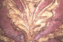 Kehelyvirág (10x-s nagyítás)
