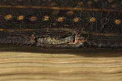 Az egykor a csatot tartó textilszalag töredéke
