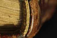 A kötet fejnél levő sapkarésze