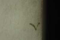 Catchletter at the edge of the sheet