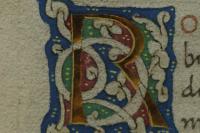 A pergamen húsoldala bolyhos felületű