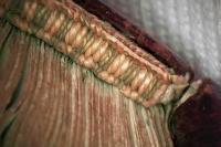A lábnál levő oromszegő mikroszkópos képe